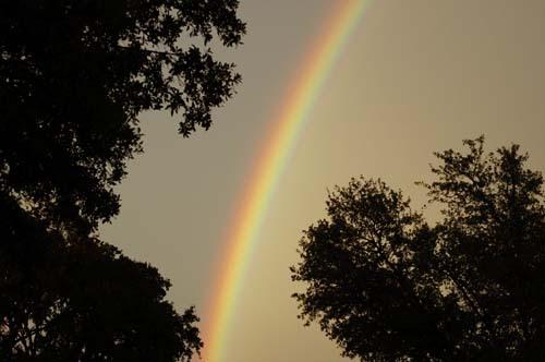 Rainbow_11207
